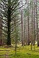 Forest (15520937485).jpg