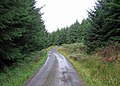 Forest Track - geograph.org.uk - 570204.jpg