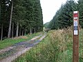 Forest Track - geograph.org.uk - 570211.jpg