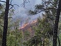 Forest fire in Almora District 2016.jpg