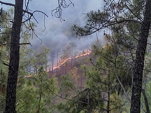 2016 Uttarakhand forest fires - Forest fire in Almora district of Uttarakhand state