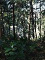 Forest in Kashima Shrine 2.jpg