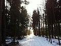 Forest near Härkingen, Weidban, Niederban - panoramio (1).jpg