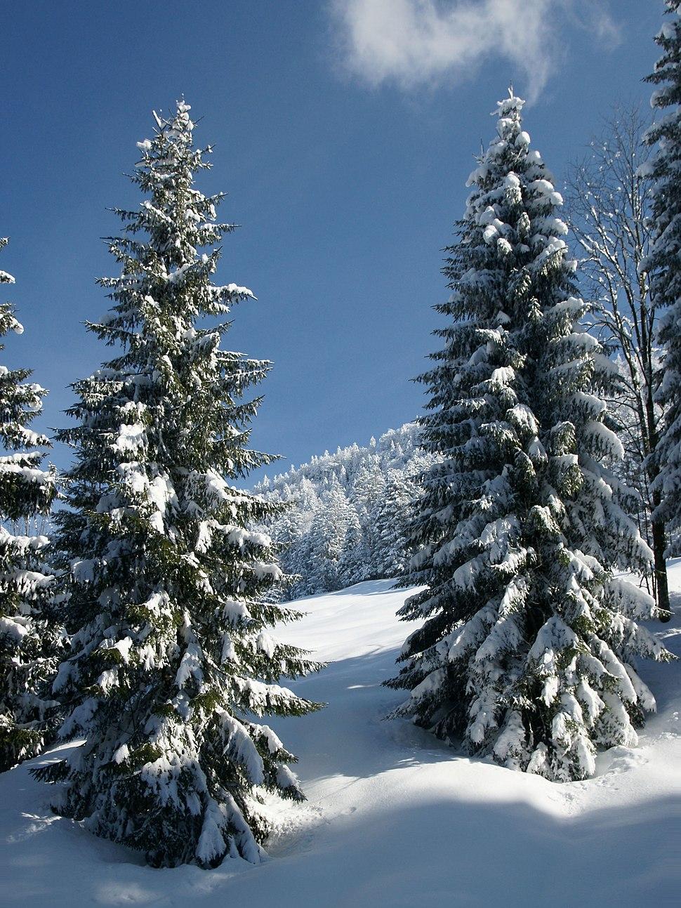 Forests in Alberschwende 3