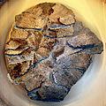 Fossilized tortoise shell (1779275570).jpg