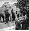Fotothek df ps 0003520 Tiere ^ Tiergärten - Zoos ^ Tiere ^ Säugetiere ^ Elefante.jpg