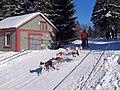 Frauenwald, Hundeschlittenrennen, 5.jpg