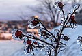 Freezing rain in Quebec city 08.jpg