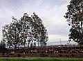 Fresno, CA, USA - panoramio (49).jpg
