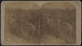From Tipped Rock, South, from Robert N. Dennis collection of stereoscopic views.png