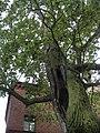 Frombork, Poland - panoramio (19).jpg