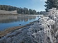 Frost along the Yellowstone River (31218032842).jpg