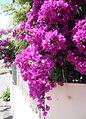 Fuerteventura (3500116095).jpg