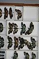 Fulgoridae Drawers - 5036713970.jpg