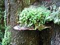 GOR Maits Rest Rainforest-3875262 143.554496 (50).jpg
