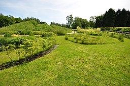 Garden at Jodrell Bank (5450)