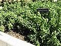 Gardenology-IMG 5190 hunt10mar.jpg