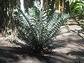 Gardenology.org-IMG 2025 hunt0903.jpg