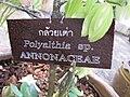Gardenology.org-IMG 8179 qsbg11mar.jpg