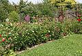 Garten Juli 2014 (15303052220).jpg