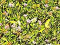 Gavazzoli-farfalla 1.jpg