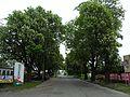 Gdańsk ulica Litewska.JPG