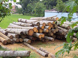 Coconut timber - Coconut logs in Klaten, Java, Indonesia.