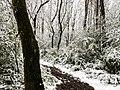 Georgia snow IMG 4553 (38060571695).jpg