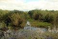 Gfp-florida-everglades-national-park-pond-with-wildlife.jpg