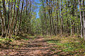 Gfp-michigan-porcupine-mountains-state-park-the-walking-path.jpg