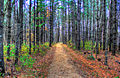 Gfp-wisconsin-forest-hiking-trail.jpg