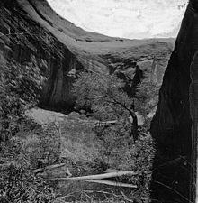 The view from the bottom of a forested canyon, showing curved rock formations above.