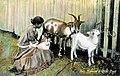 Goat nursing a child.jpg