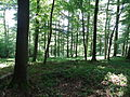 Grünes Meer Wald 01.JPG