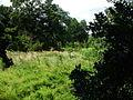 Grassland near Aysgarth Upper Falls - geograph.org.uk - 1409552.jpg