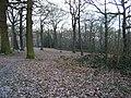 Great Bull Wood - geograph.org.uk - 129938.jpg