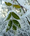 Green ^ white - Flickr - Stiller Beobachter.jpg