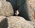 Green Point, Newfoundland (2745997205).jpg