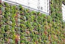 Green Wall Sentier Claye-Souilly 01.jpg