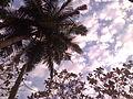 Ground-based Sky View + Coconut Tree.jpeg