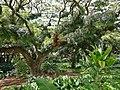 HI Oahu Queen Emma Summer P8.jpg