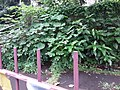 HK 九龍城 Kowloon City 何文田 Ho Man Tin 公主道 Princess Margaret Road June 2019 SSG 37.jpg