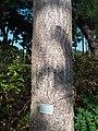 HK CWB 銅鑼灣 Causeway Bay 維多利亞公園 Victoria Park tree trunk n green leaves December 2019 SSG 14.jpg