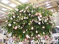 HK Wan Chai China Resource Building HK Exhibition Centre 許願樹 Wish Tree.JPG