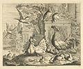 Haan, hen met kuikentjes en andere vogels in een tuin met antieke ru?s.jpeg