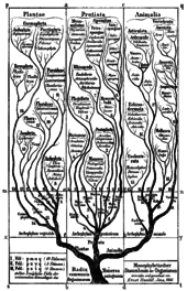 history of nomenclature and taxonomy[edit]