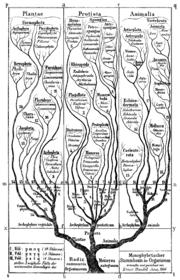 Árbol de la vida según Haeckel en su Morfología General de los organismos