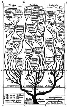 define natural progression