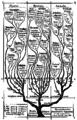 Haeckel arbol bn.png