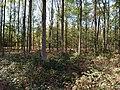 Hambach forest 56.jpg